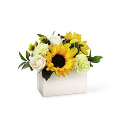 The FTD Sweet as Lemonade Bouquet from Victor Mathis Florist in Louisville, KY