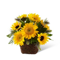 The FTD Perfect Sun Bouquet from Victor Mathis Florist in Louisville, KY