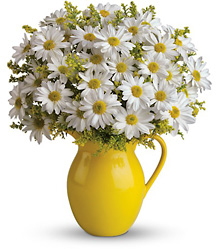 Teleflora's Sunny Day Pitcher of Daisies from Victor Mathis Florist in Louisville, KY