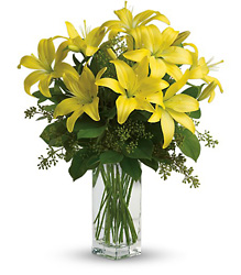 Teleflora's Lily Sunshine from Victor Mathis Florist in Louisville, KY