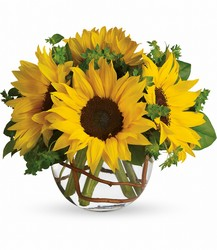Sunny Sunflowers from Victor Mathis Florist in Louisville, KY