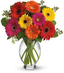 Teleflora's Gerbera Brights from Victor Mathis Florist in Louisville, KY
