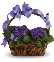 Violets And Butterflies from Victor Mathis Florist in Louisville, KY
